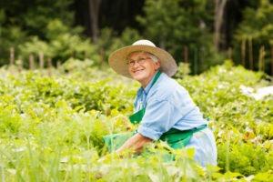 horticultural therapy for seniors Atlanta GA