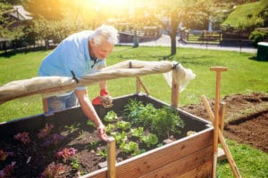 Horticultural Therapy: a Growing Trend!, A.G. Rhodes